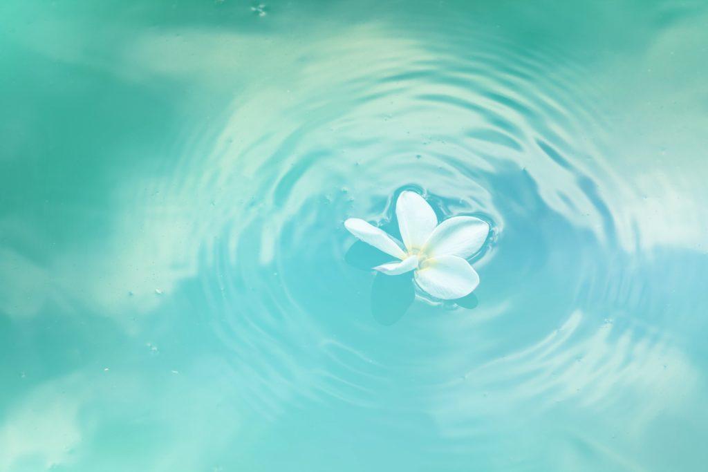 fiore in acqua
